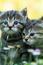 Preview iPhone wallpaper Two kittens, wildflowers, summer