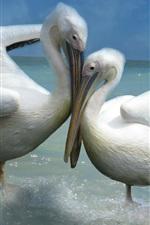 미리보기 iPhone 배경 화면 두 펠리컨, 사랑, 바다