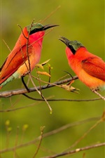 Preview iPhone wallpaper Two red feather birds, bee-eaters