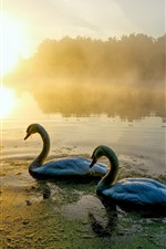 Preview iPhone wallpaper Two swans, river, morning, fog
