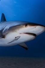 미리보기 iPhone 배경 화면 수중, 바다, 상어