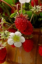 Preview iPhone wallpaper Unripe strawberry, flowers