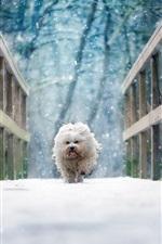Preview iPhone wallpaper White dog walk on bridge, snow, winter