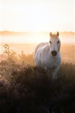 Preview iPhone wallpaper White horse, bushes, fog, morning