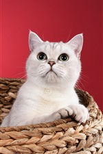 Preview iPhone wallpaper White kitten, basket, red background