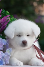 Preview iPhone wallpaper White puppy and flowers