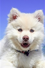Preview iPhone wallpaper White puppy, front view, sea, beach