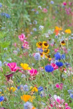 Wildflowers, spring, colorful, pink, yellow, blue