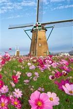 Preview iPhone wallpaper Windmill, grass, pink kosmeya flowers