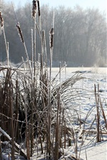 Preview iPhone wallpaper Winter, reeds, snow, windmill
