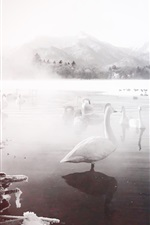Preview iPhone wallpaper Winter, white swans, lake, snow, fog
