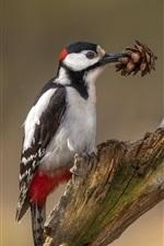 Preview iPhone wallpaper Woodpecker, bird photography