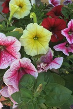 Yellow, pink, red flowers