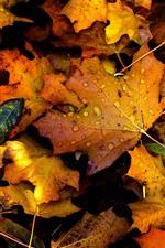 iPhone壁紙のプレビュー 秋、黄色のカエデの葉、水滴