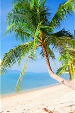 iPhone обои Пляж, пальмы, море, тропический, лето