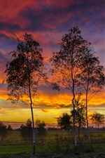 Preview iPhone wallpaper Birch, trees, clouds, sunset