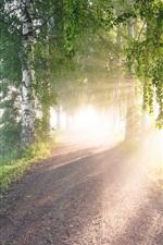 Birch, trees, road, sun rays, fog, morning
