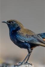 Bird, stones, bokeh