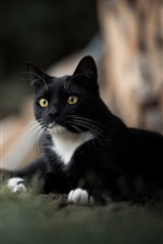 Preview iPhone wallpaper Black cat, yellow eyes, hazy