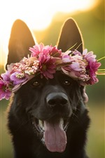 Preview iPhone wallpaper Black dog, face, wreath