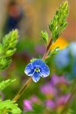 iPhone壁紙のプレビュー 青い花、植物