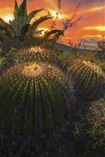 Preview iPhone wallpaper Cactus, needles, rocks, sunset