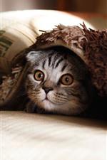 iPhone fondos de pantalla Gato, cama, almohada