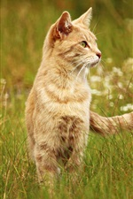 Preview iPhone wallpaper Cat in the grass, tail, look
