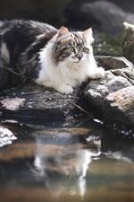 Gato, pedras, água