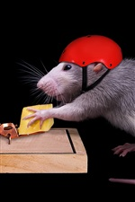 Preview iPhone wallpaper Clever mouse, helmet, cheese, mousetrap, funny animals