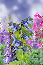 Colorful flowers, pink, purple, red