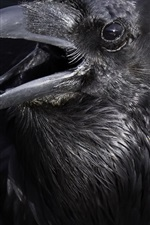 Preview iPhone wallpaper Crow, black bird, beak
