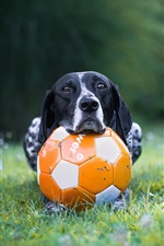 Preview iPhone wallpaper Dog and football, grass
