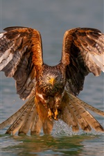 Preview iPhone wallpaper Eagle, wings, water, lake