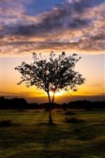 England, Fritham, beautiful sunset, tree, grass, clouds