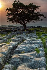 Preview iPhone wallpaper England, Yorkshire Dales, trees, stones, sunset