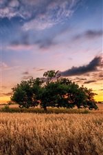 Field, tree, clouds, sunset