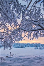 Preview iPhone wallpaper Finland, trees, thick snow, winter