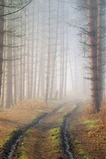 Preview iPhone wallpaper Forest, trees, path, haze