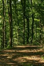Preview iPhone wallpaper Forest, trees, path, sunlight