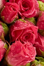 Preview iPhone wallpaper Fresh red roses, flowers background, water droplets