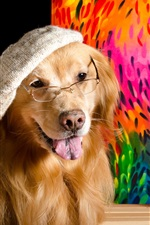 Preview iPhone wallpaper Funny animal, dog painter, hat, glasses, brushes