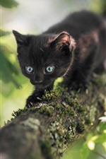 Preview iPhone wallpaper Furry black kitten, blue eyes, tree