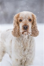 Preview iPhone wallpaper Furry dog, snow, winter