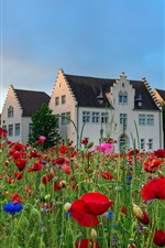Preview iPhone wallpaper Germany, houses, poppies