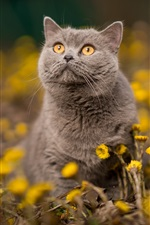 Preview iPhone wallpaper Gray cat, orange eyes, yellow flowers