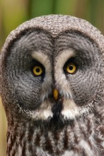 Preview iPhone wallpaper Gray owl, yellow eyes