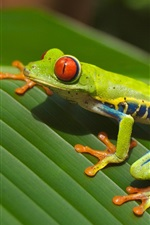 Preview iPhone wallpaper Green frog, leaf
