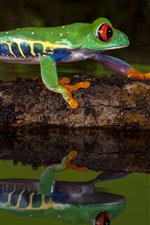 Preview iPhone wallpaper Green frog, water, reflection