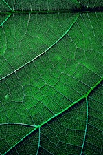 Green leaf macro photography, texture